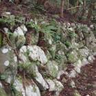庭園の石垣