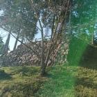 出丸跡の石垣、逆光でした