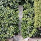 木の葉に隠れたような石碑