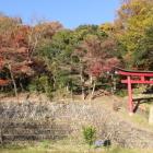安桜山公園より関城を見上げる