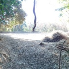 二条城本丸と目される場所。調査の為か、雑木等が刈り取られ、サッパリとした様相。