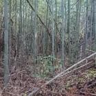 竹藪となっている曲輪