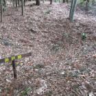 落葉に埋もれた井戸跡