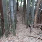 二ノ丸への土橋(小幡城に似てる)