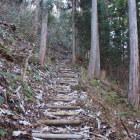 整備された登城道。本丸郭まで木の階段で歩き易くなっています。