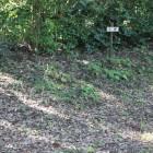 本丸下段曲輪(南側)