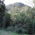 山側に向かって幅広い空堀、藪で見えず