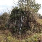 三の郭虎口石塁、写真左から畝状竪掘群に行けるが・・ん~草で無理(>_<)