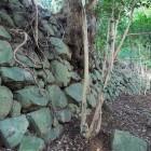 西登り石垣③