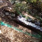 ニノ門脇の石垣1