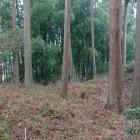 羅漢の森の奥、堀切っぽい
