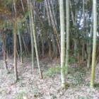竹林の先にも土塁っぽい地形