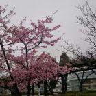 清洲城に春