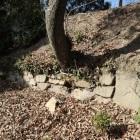 扇の丸の石垣