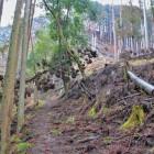 登城路 倒木が凄まじい