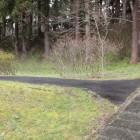 本丸西側の堀と土塁