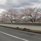 涌谷川沿いの白土塀
