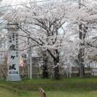 二の丸に在る別名鹿ヶ城の看板と桜並木