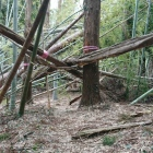 セッテイは倒木で立入禁止