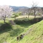 二の丸上段の1本桜、本丸間1の堀