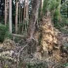 芥川山城 台風の爪痕