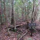 伝 茶屋の壇