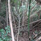 主郭北下に井戸がある…はずですが、竹藪で断念