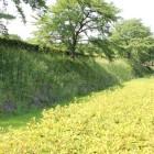 本丸東側石垣、空堀