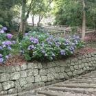 もうひとつ紫陽花