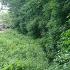 南東側の堀 、こちらも折れが