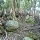 山腹には岩がゴロゴロ