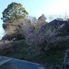 三の丸から見た桜越の二の丸