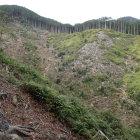 登城路横の谷