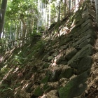 秀次居館の竹藪の中の石垣