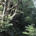 高天神城の小笠丘陵急峻な崖