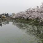 同左外濠と桜