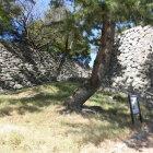 蜜柑丸跡から本丸への階段