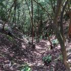 曲輪群反対側斜面の竪堀