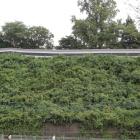 復元二の丸白土塀