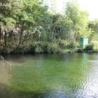 同左池、天然記念物ハリヨが生息池