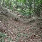 伝二の丸~主郭の竪掘