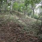 畝状竪掘群