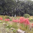 二郭の花畑