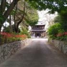 阿弥陀寺参道、彼岸花が綺麗。