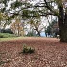 本城曲輪です。落葉絨毯がきれいです。
