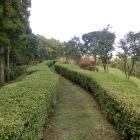 二ノ丸の現況(公園化で植栽されてます)