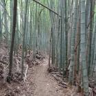 頂上から水無瀬の滝へ向かう途中の竹林。