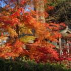 観音正寺の最後に残っていた紅葉