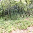 小宮曲輪の堀