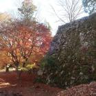 紅葉と本丸高石垣